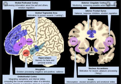 Sex-Related Neuroanatomical Basis of Emotion Regulation Ability